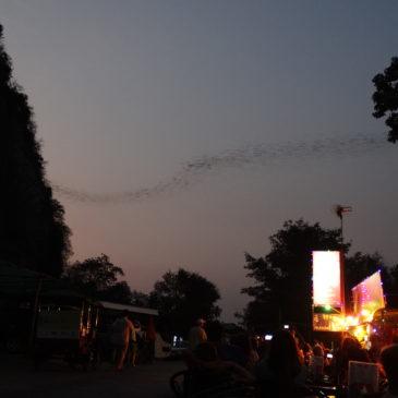 Les chauves-souris de Phnom Sampov