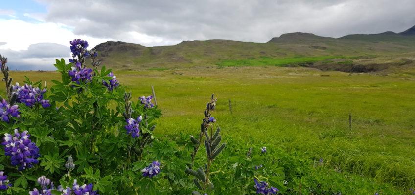 Entre Reykjavik et Hvalfjordur