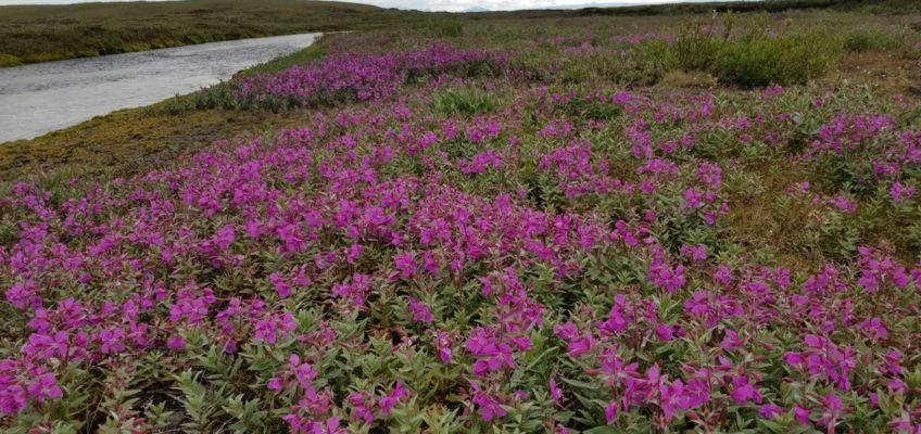 Islande été 2020 Piste entre Grimsstadir et Dettifoss-3