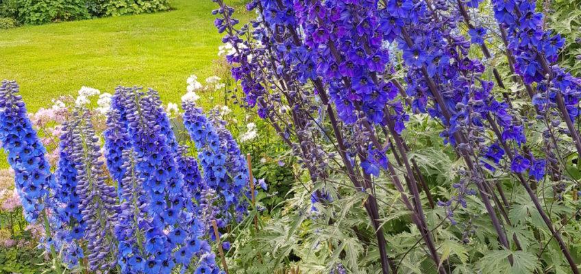 Akureyri - Jardin botanique