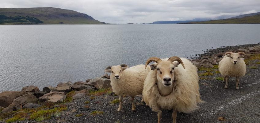 Route 1 au SE du fjord de Hvalfjordur